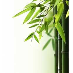 Bambus 10ml