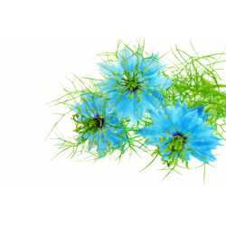 Damašský kvet 10ml
