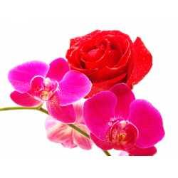 Jasmín + ruža + orchidea 10ml