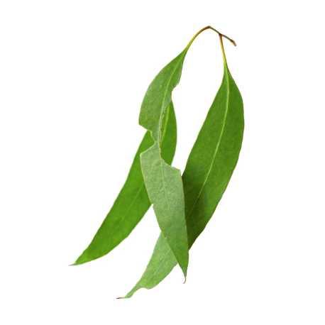 Eukalyptus list 50 g
