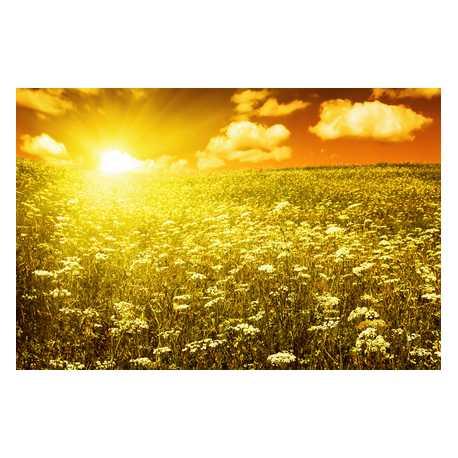 Jantárové slnko - antialergický 200ml