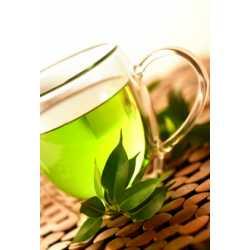 Extrakt zo zeleného čaju 12ml