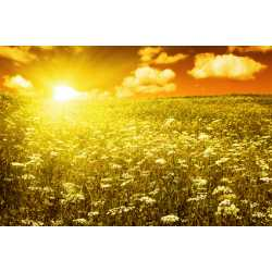 Jantárové slnko - antialergický 10ml
